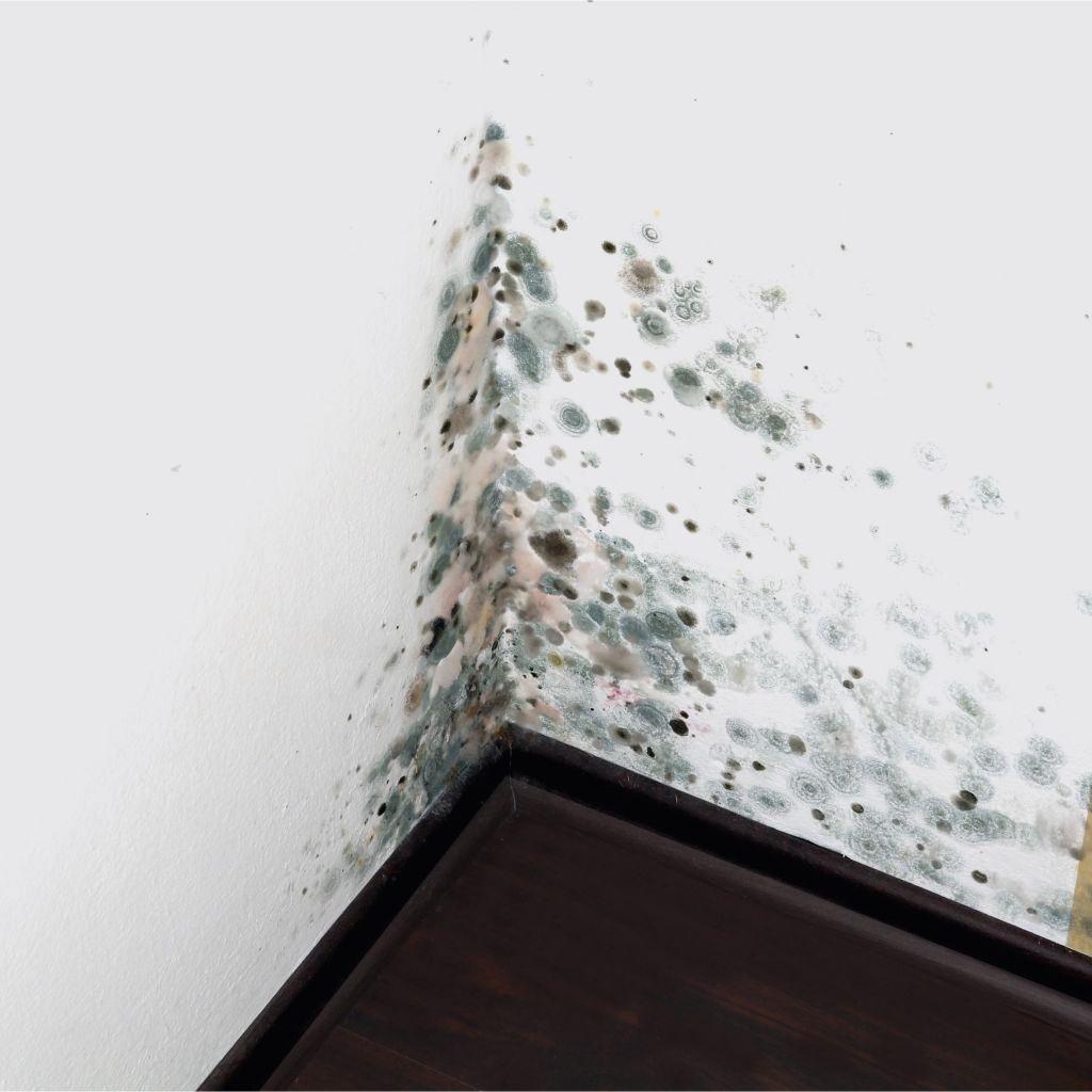 Assainissement des moisissures siegenthaler peinture s a - Nettoyer moisissure salle de bain ...